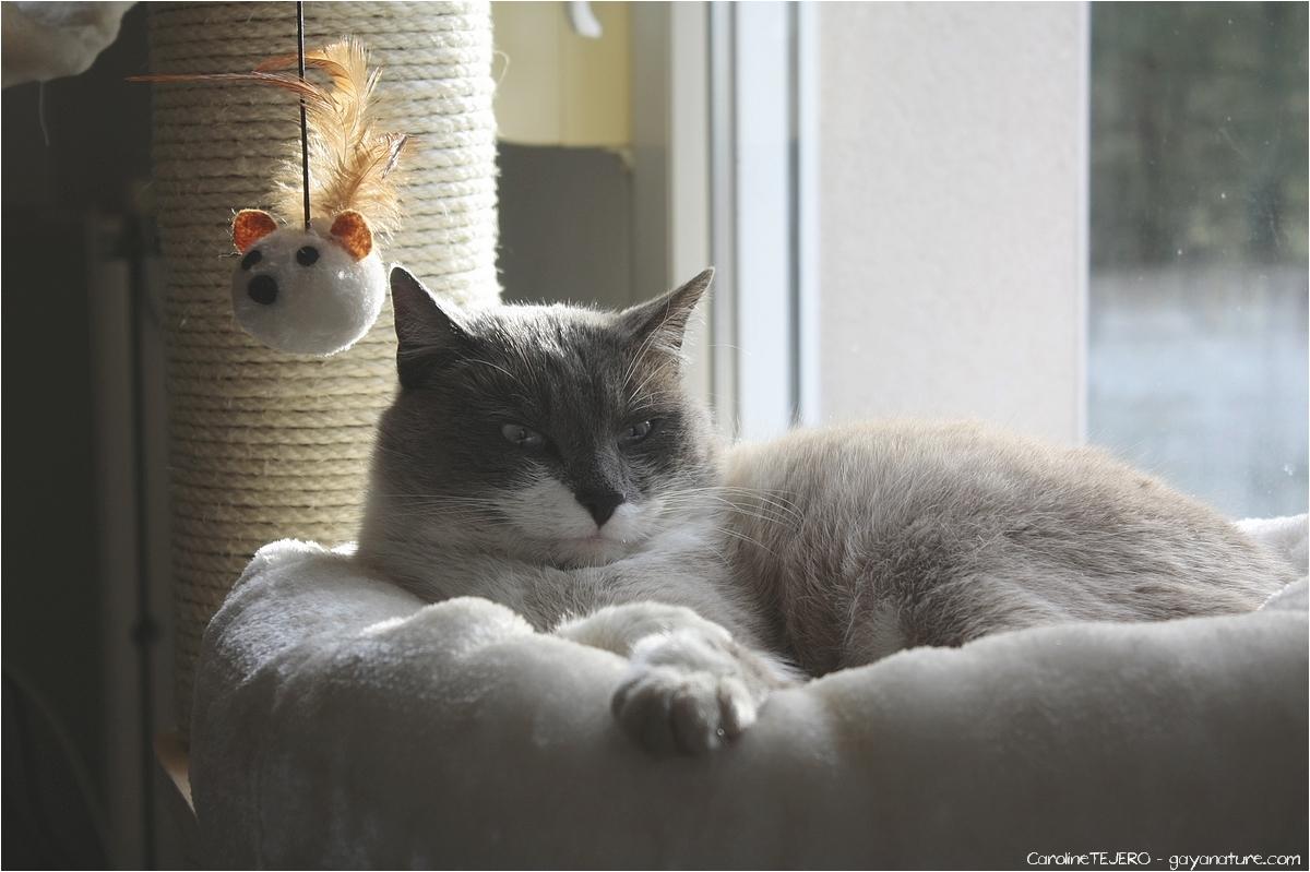 La vie des chats à Patouland