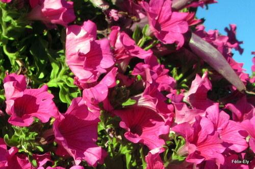 Des fleurs à la belle couleur!
