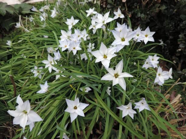 Le printemps au jardin...