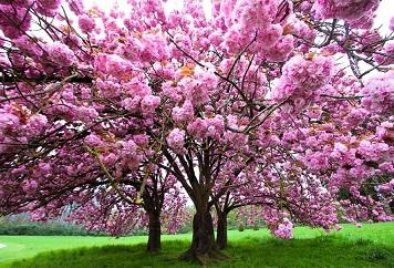 L'art de fleurir à temps ...