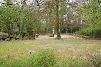 Zoo Osnabruck d50 2012 216