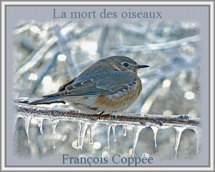""""""" La mort des oiseaux """" poème de François Coppée"""