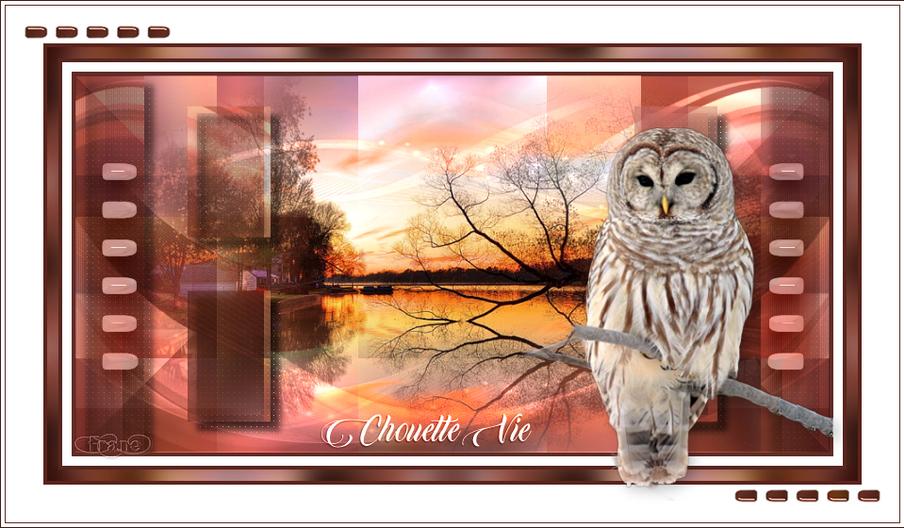 Chouette_Vie