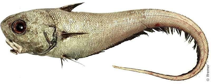 appat sardine méditerranée