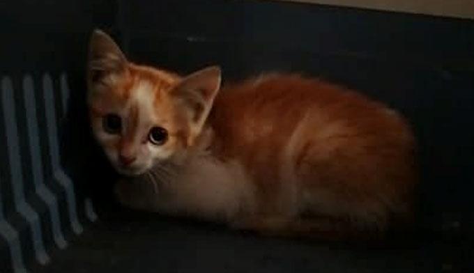 OUNA, chaton : On lui a tranché la patte…