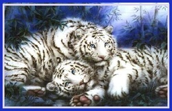 Mohan : Le Tigre Blanc Royal