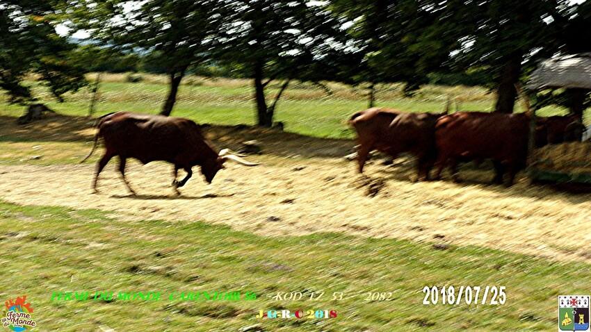 FERME DU MONDE CARENTOIR 56  2/4      D 27/08/2018