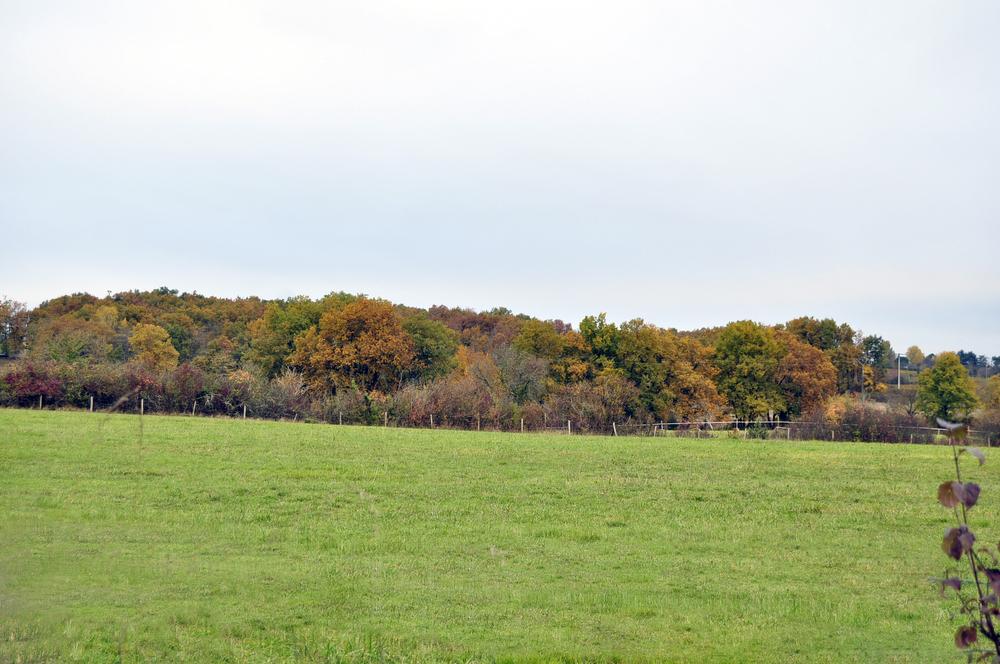 Toujours l'automne
