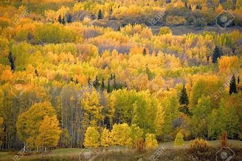 Les régions stars de l'automne ...