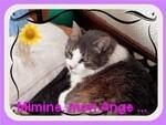Blog de Mimine et Cie