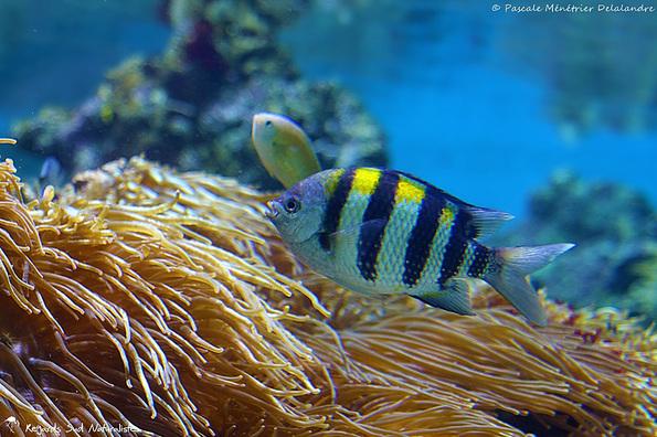 Mare Nostrum et quelques uns de ses poissons