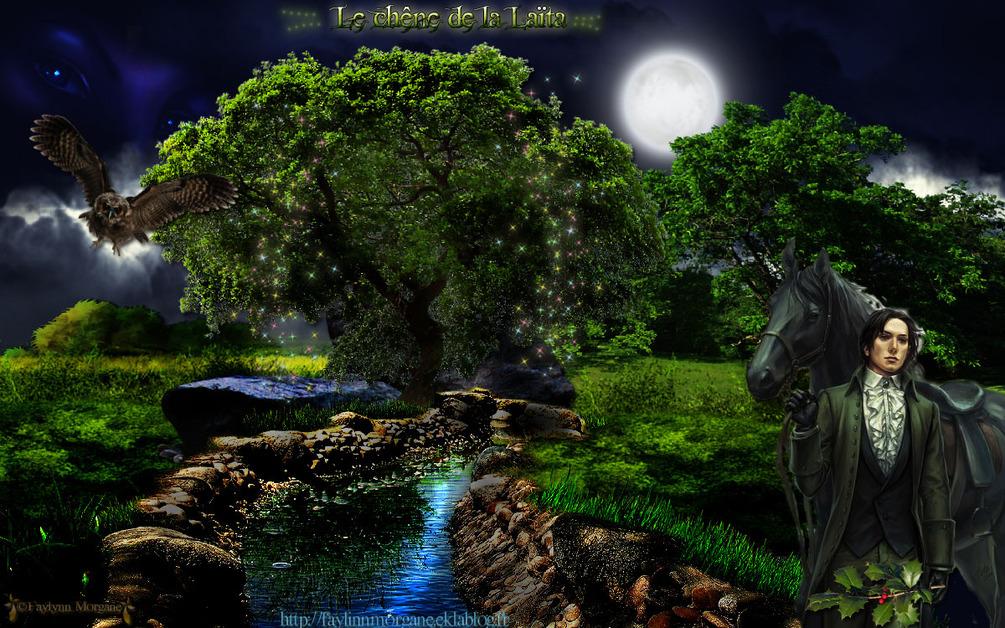 Le vieux chêne de la Laita