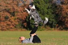 Le dogdancing
