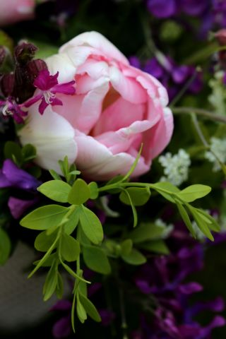 Trois tulipes et puis s'en vont