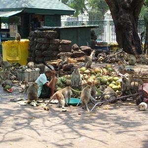 Le Temple des singes - Thaïlande