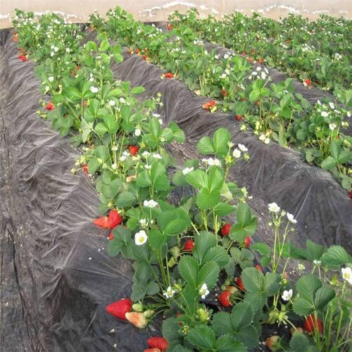 Malentendu des végétables dans la serre