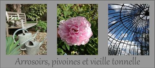 Seeds of Love : Portrait d'Anciens : Véronique G