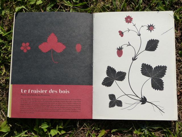 L'herbier d'Émilie Vast. Petite flore des bois d'Europe