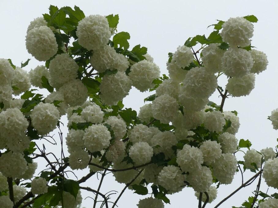 Cascade fleurie