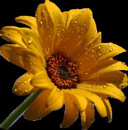 tube fleurs