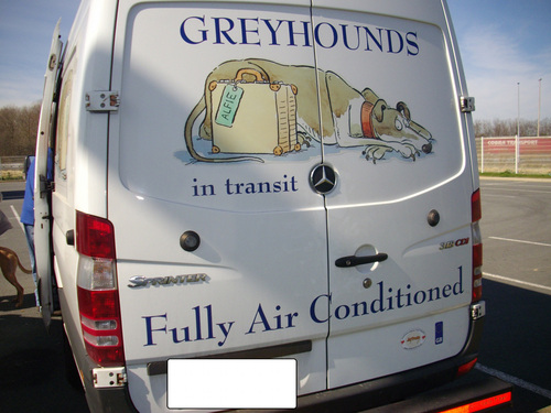 Le sauvetage du coeur / Greyhouds rescapés d'Angleterre arrivés le 12 janvier