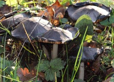 champignons automne08