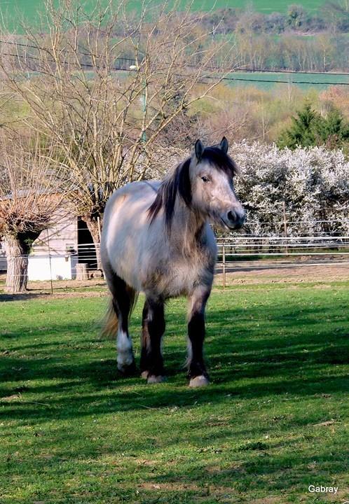 z09 - Le cheval