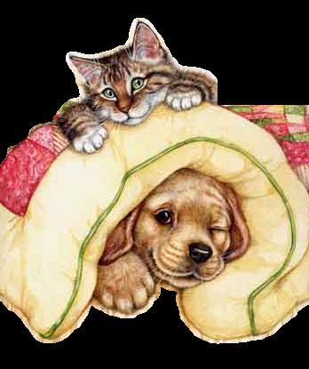 Tube chat et chien