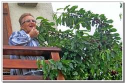 MON CERISIER - DE LA FLEUR AUX FRUITS
