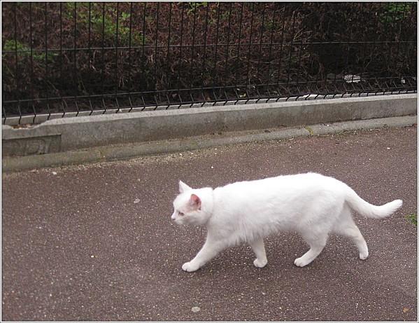 Mon-chat-et-les-autres 0895-crop