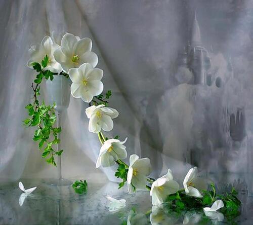 Fleurs , paysage ..