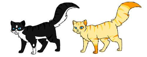 Ma nouvelle façon de faire les chats et une question