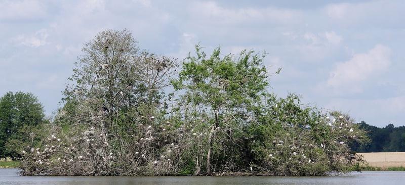 arbres aux pics boeuf