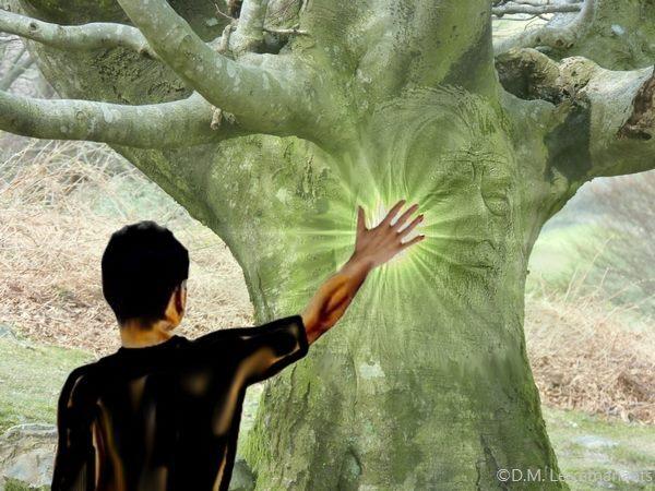 Résultats de recherche d'images pour «énergie des arbres»