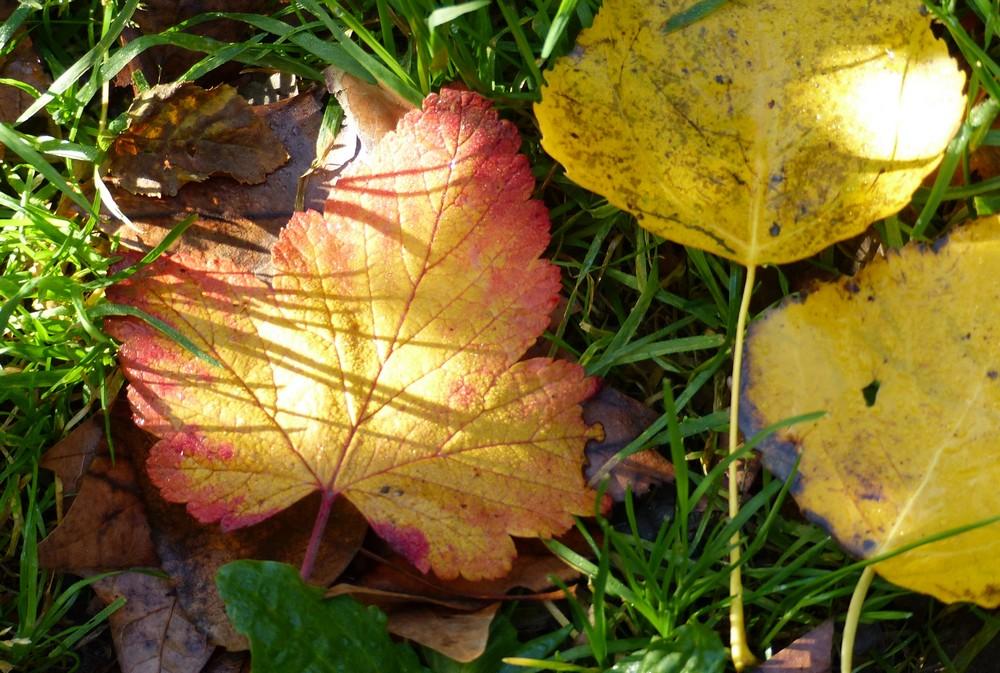 Un automne sous le soleil