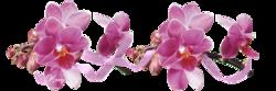 Mon orchidée 2014 !
