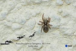 Quelques araignées tout simplement