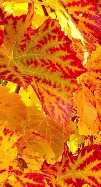 l'automne et toutes ses couleurs