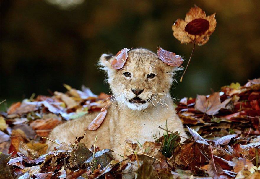 Bonjour... je ne sais pas si j'aime l'automne ....