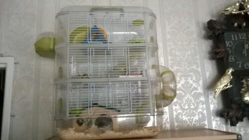 les différentes cages pour hamster