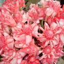 Le bouquet merveilleux de Mistouflette