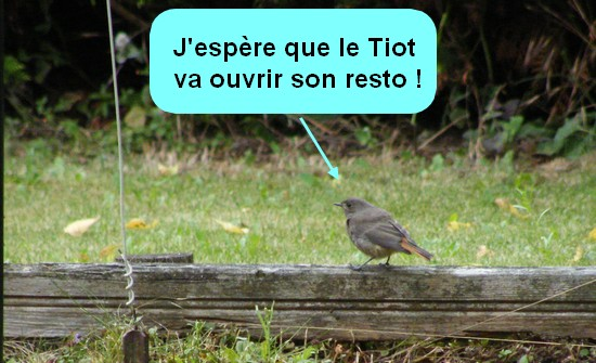 C'est l'automne le resto de Tiot va ouvrir!
