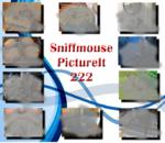 PictureIt 222 - Sniffmouse