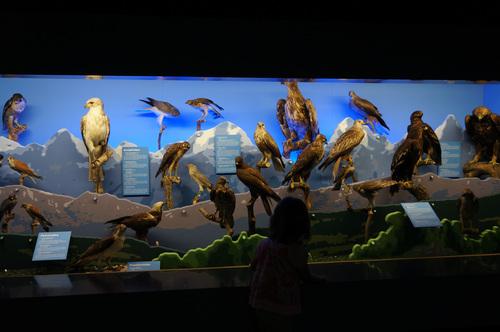 Muséum - Genève
