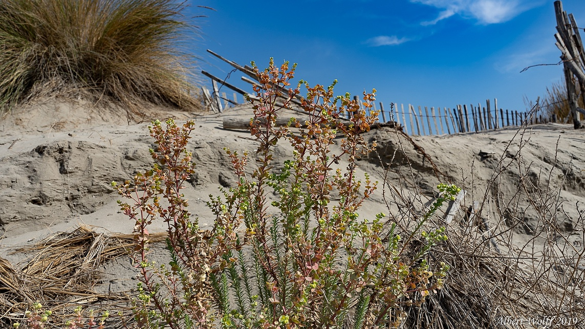 Dans le travers du Petit Travers -  2