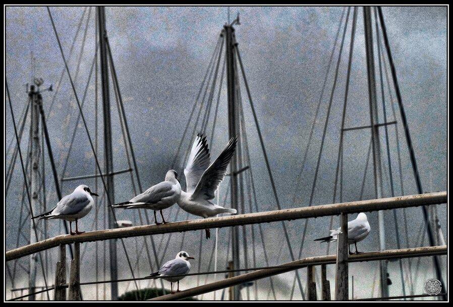Les mouettes sur le port