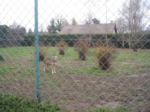 Novembre 2012 : visite du domaine des fauves de Fitilieu