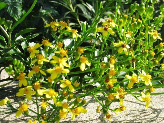 vues-fleurs-chez-jean-louis-141110-018.jpg