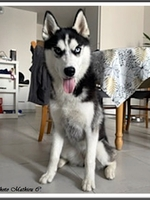 Sokaris (7 mois)