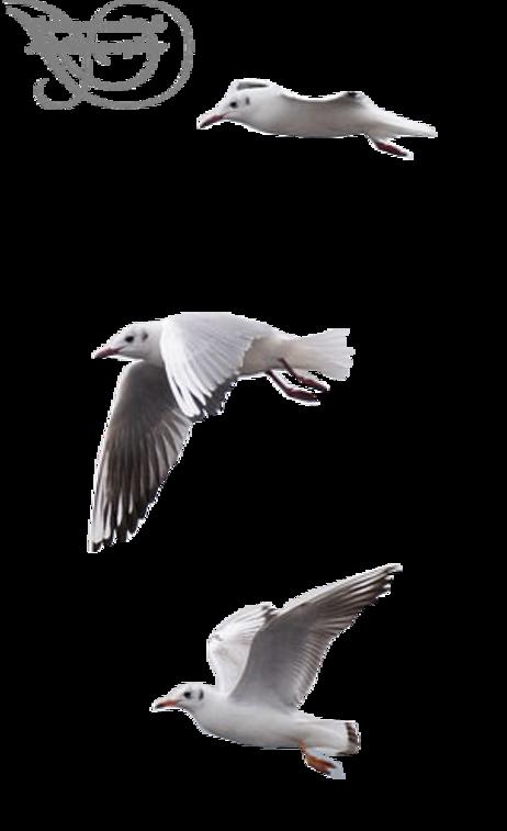 quelques oiseaux marins
